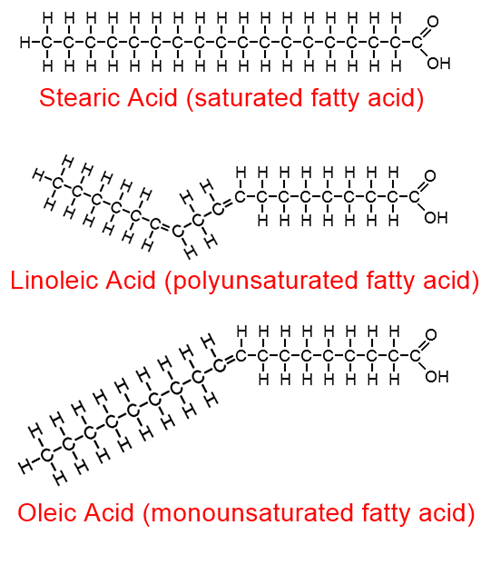chemical formulas showing the shape of fatty acid molecules