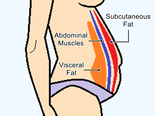 Diagram of a person -side view- showing the layers of abdominal and subcutaneous fat