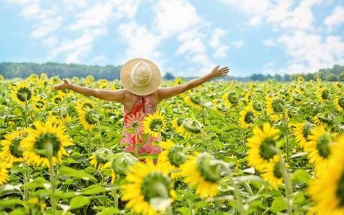 woman arms open wide in a sunny field of sunflowers