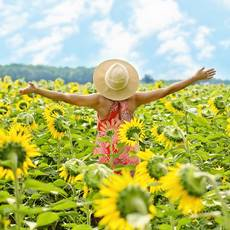 woman arms open wide in field of sunflowers
